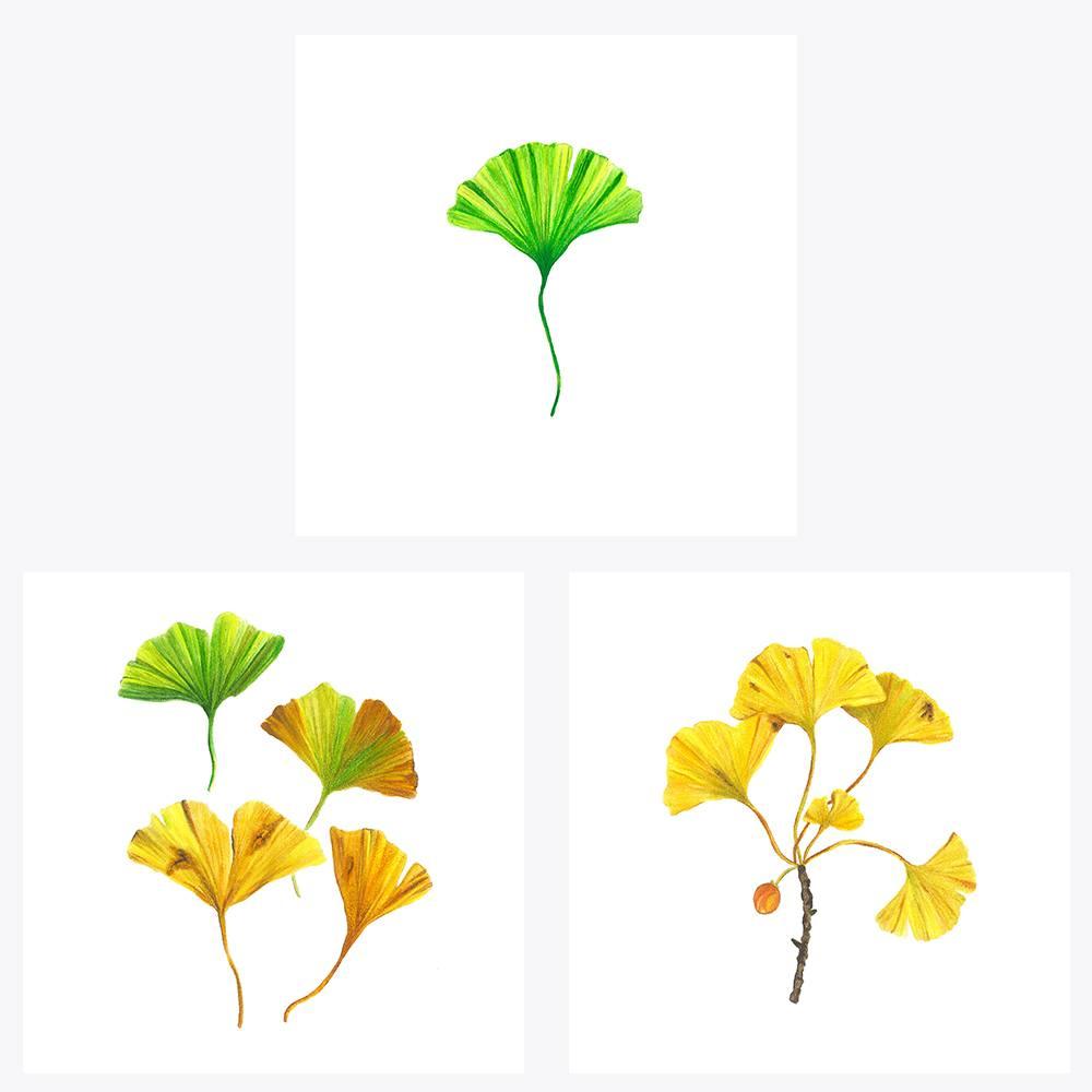 3'lü Ginkgo | Fine Art Print