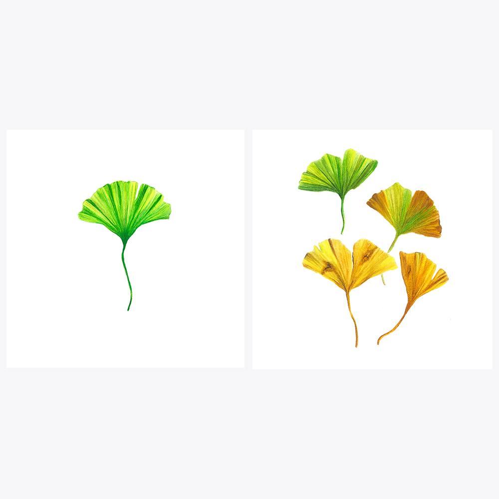 2'li Ginkgo Yaprakları