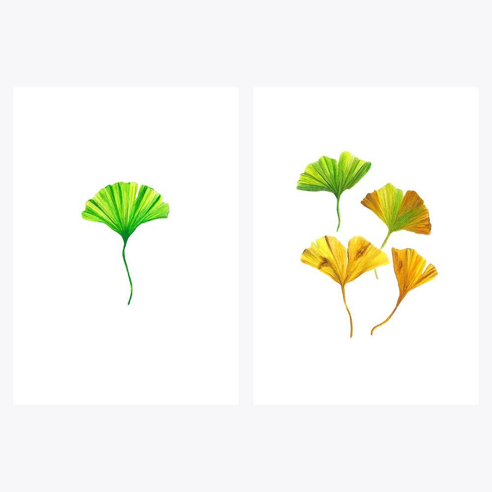 2'li Ginkgo Yaprakları | Fine Art Print
