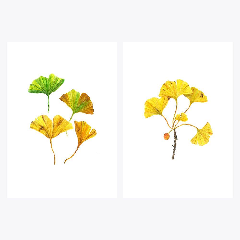 2'li Ginkgo Sonbahar | Fine Art Print