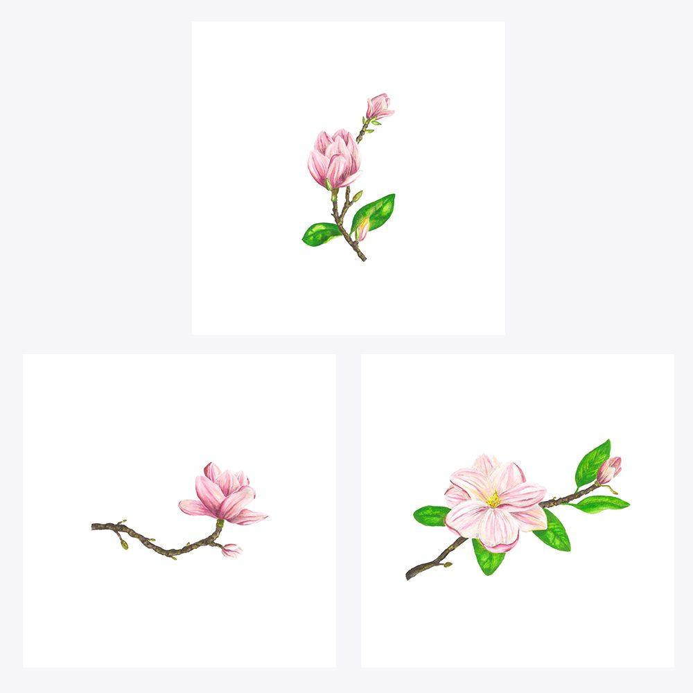 3'lü Pembe Çiçekli Manolya | Fine Art