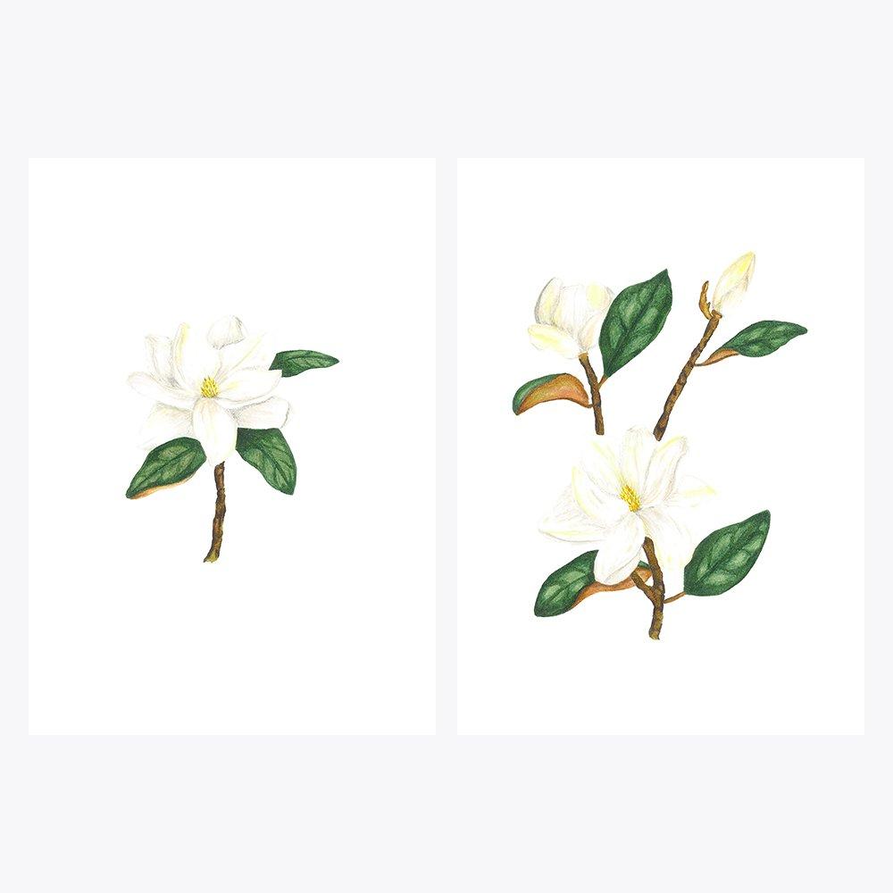 2'li Beyaz Çiçekli Manolya | Fine Art Print