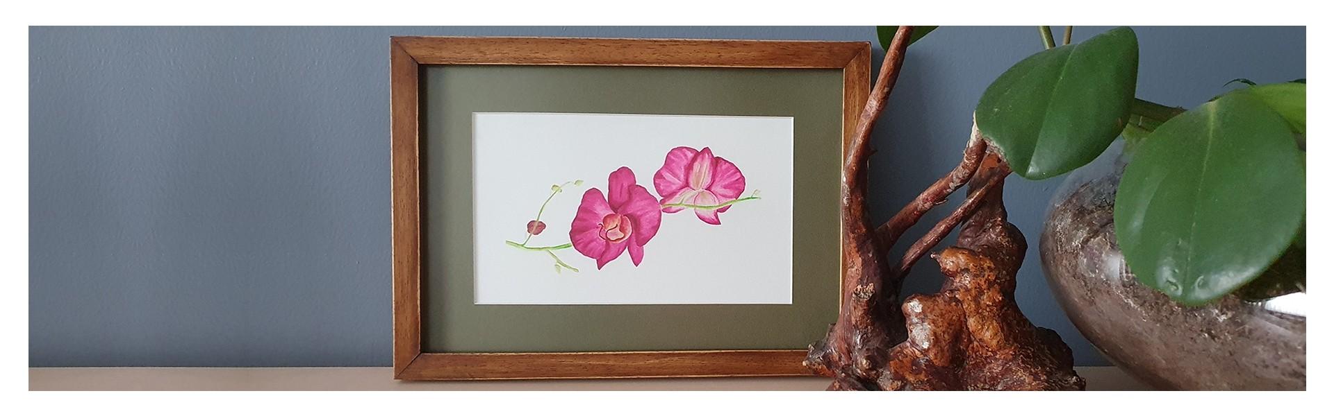 Orkide-Fusya-Yatay