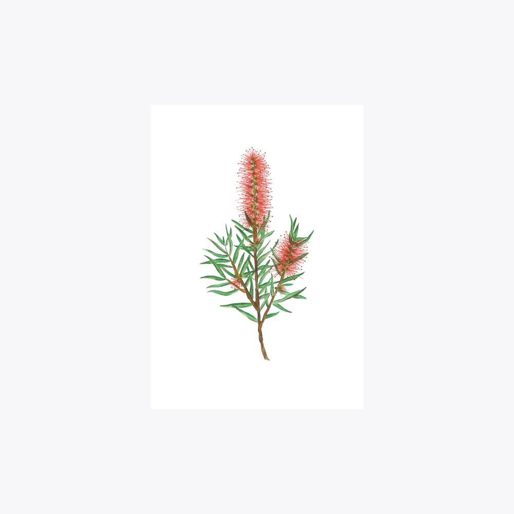 Fırça Çalısı Çoklu Dal  | Fine Art Print