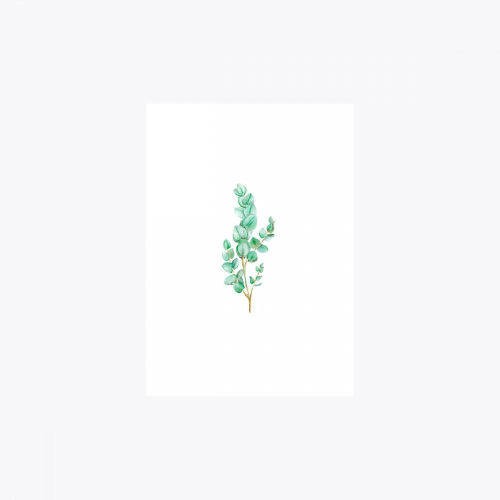 Okaliptus Dal | Print