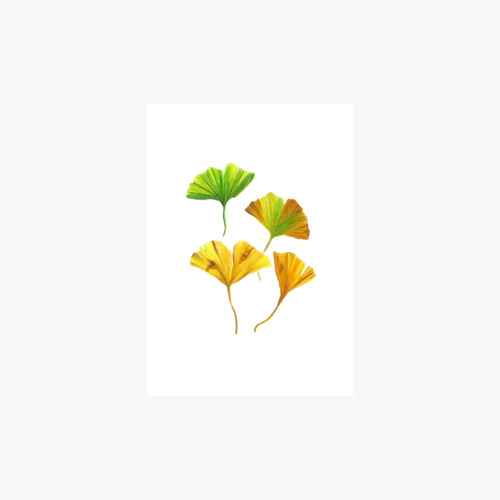 Ginkgo Çoklu Yaprak | Fine Art Print