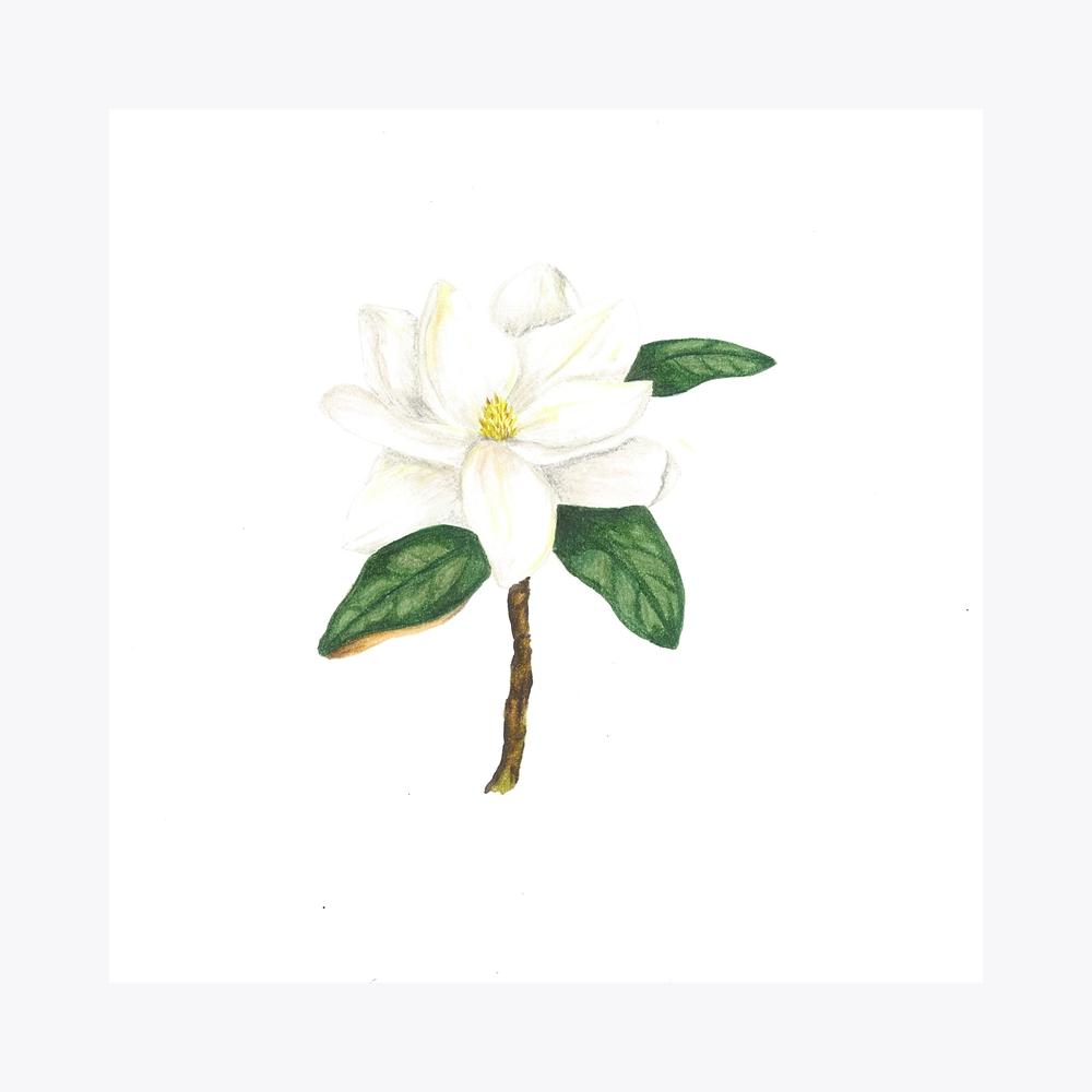 Manolya Çiçek | Fine Art Print