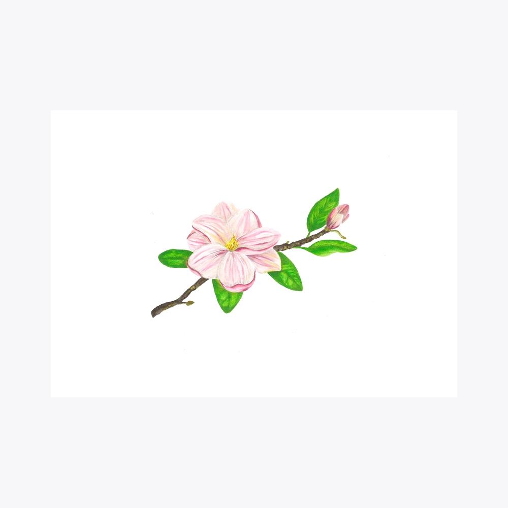 Manolya Yatay Çiçekli Dal | Fine Art Print