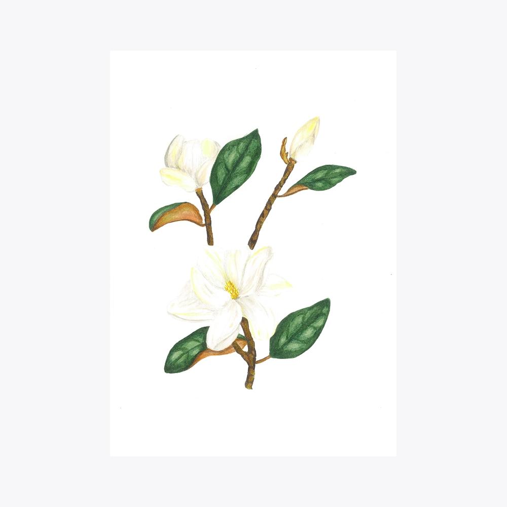 Manolya Çoklu Dal | Fine Art Print