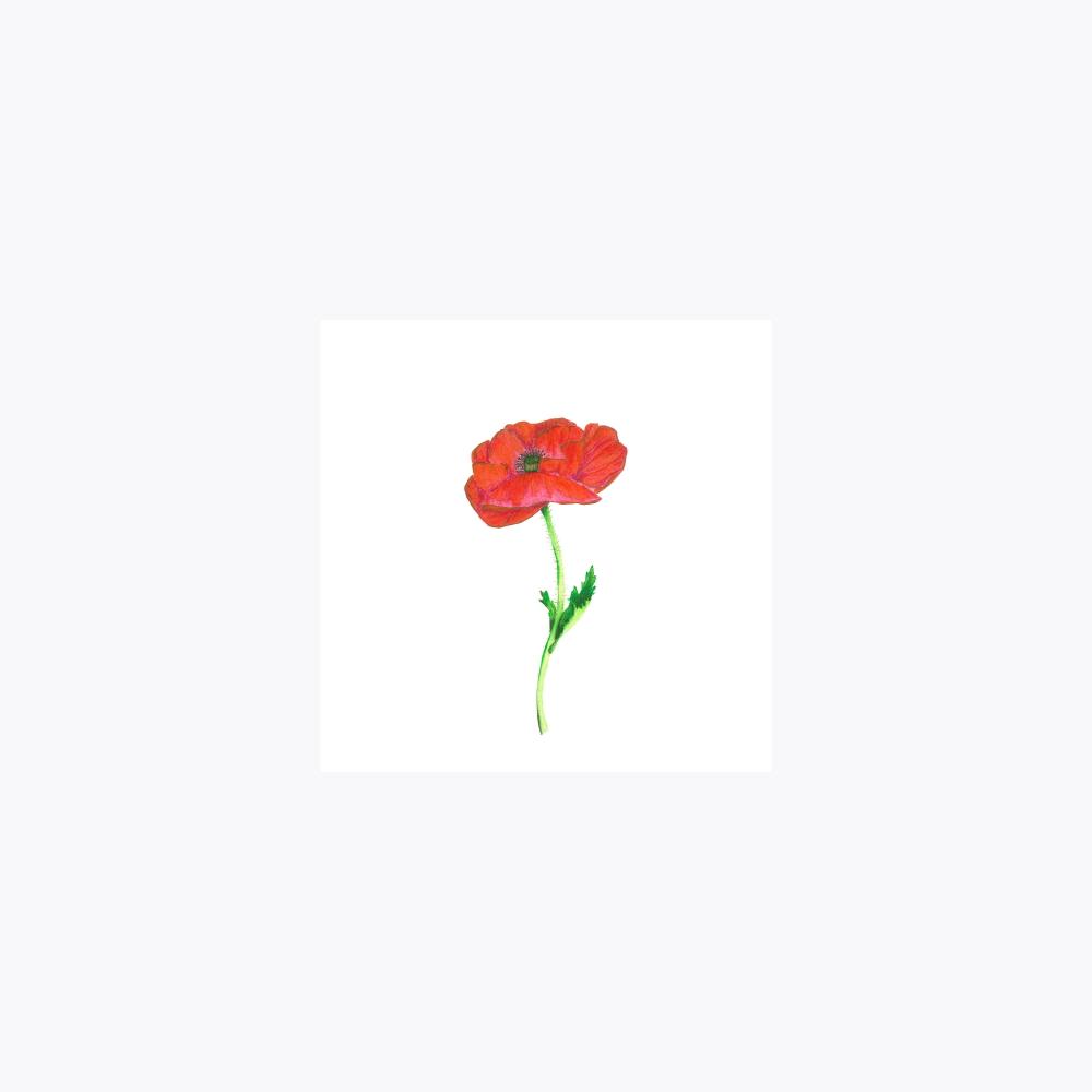 Gelincik Çiçeği | Print