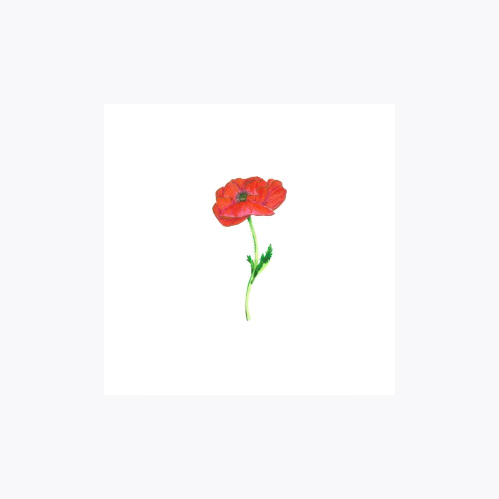 Gelincik Çiçeği | Fine Art Print