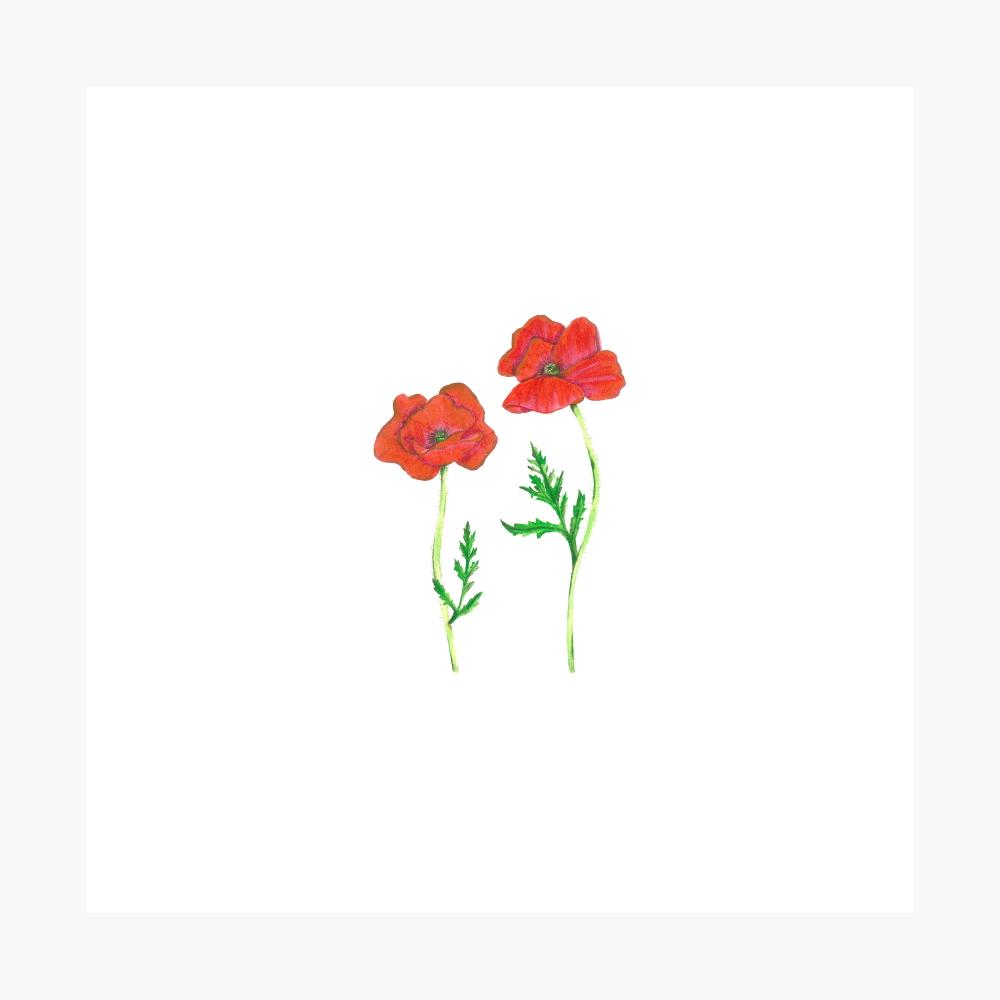 Gelincik Çiçeği İkili | Fine Art Print