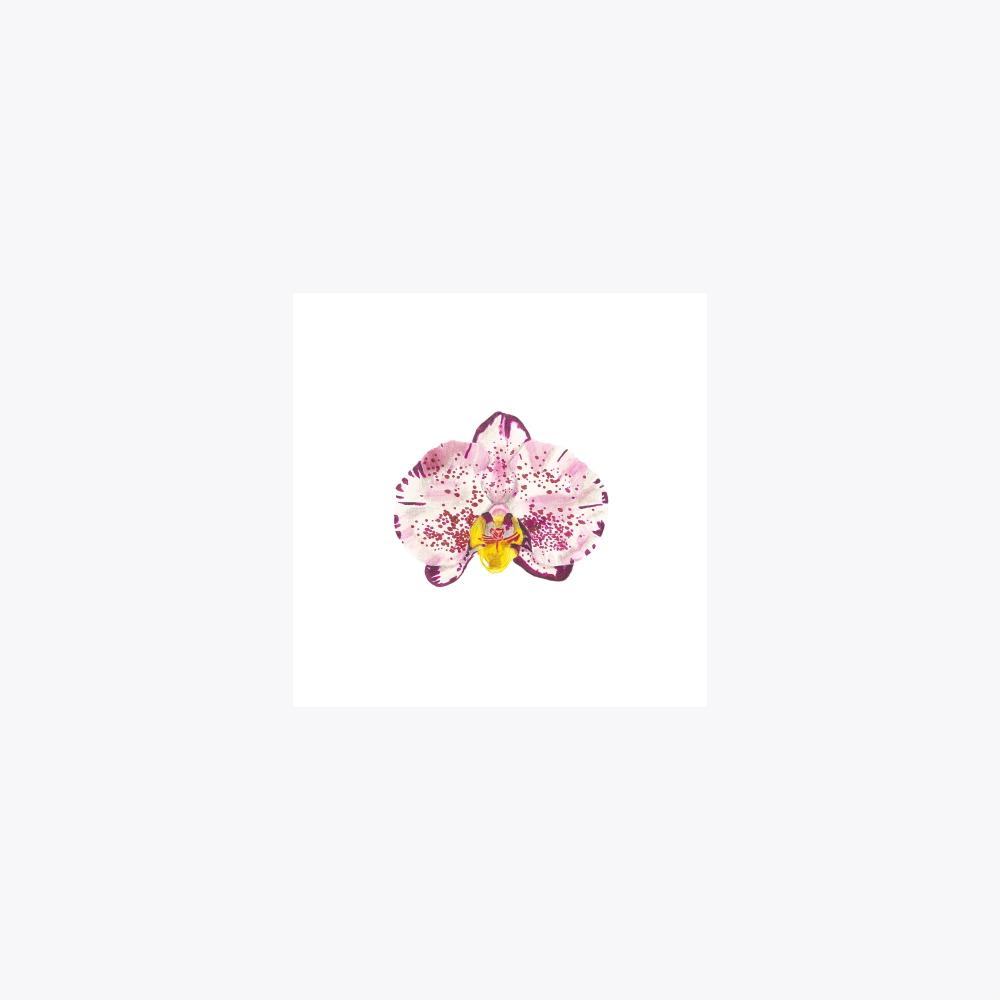 Orkide Çiçeği | Fine Art Print