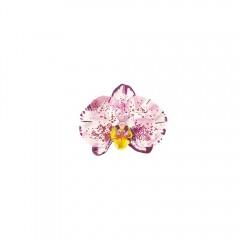 Phalaenopsis sp. | ORKİDE