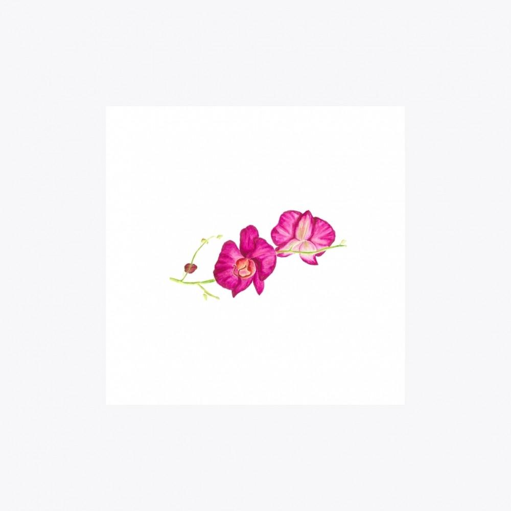 Orkide Çiçeği Yatay Dallı | Fine Art Print
