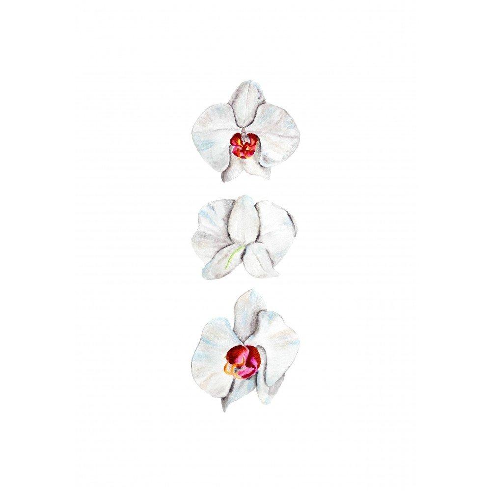 Orkide Çiçeği Görünüşler