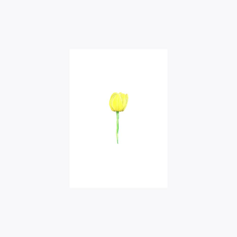 Lale Çiçeği Tekli