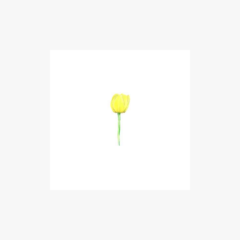 Lale Çiçeği Tekli | Fine Art Print