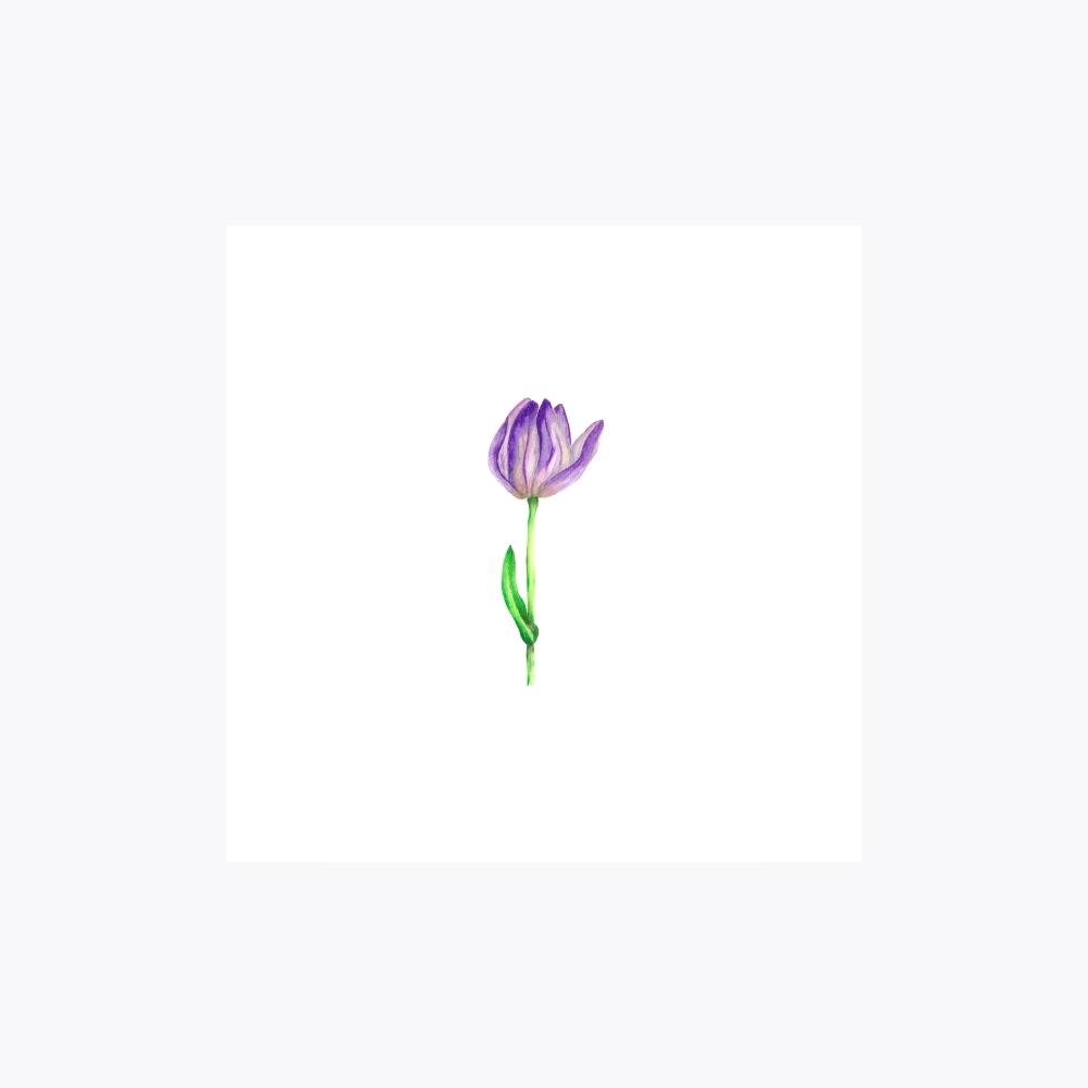 Lale Çiçeği Açılan Gonca | Fine Art Print