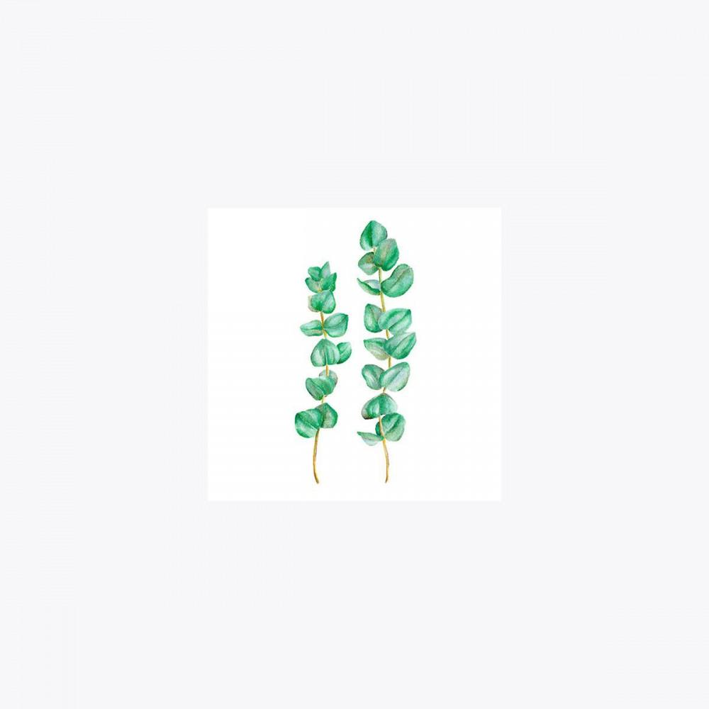 Okaliptus İkili Dal | Fine Art Print