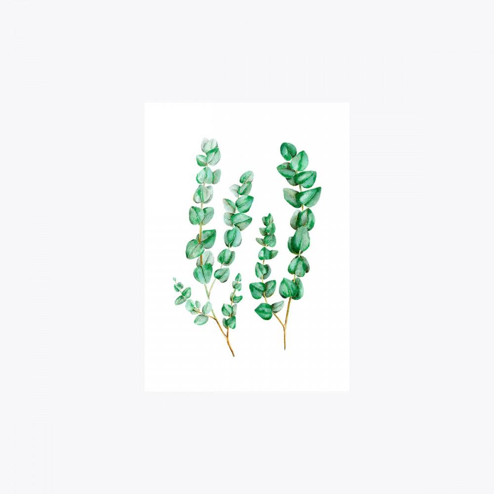 Okaliptus Çoklu Dal | Print