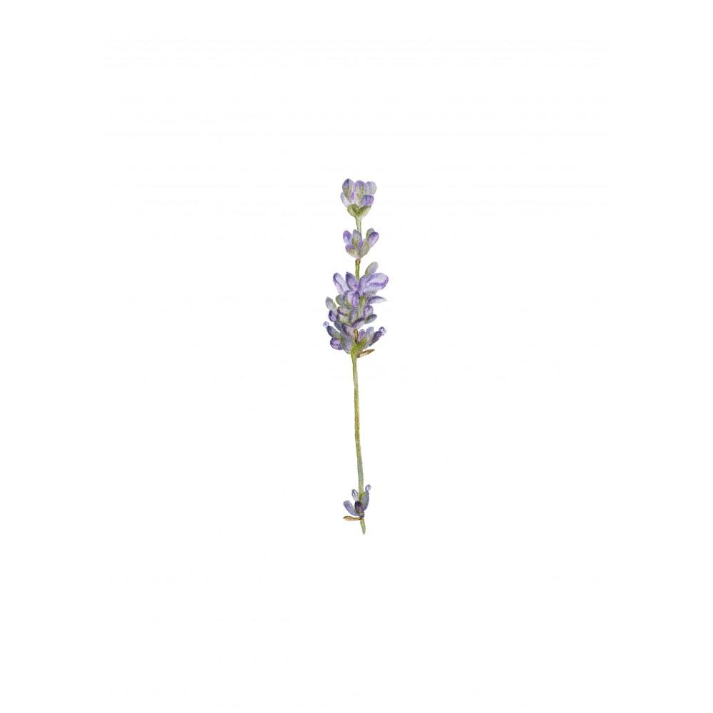 Lavanta Çiçek | Print