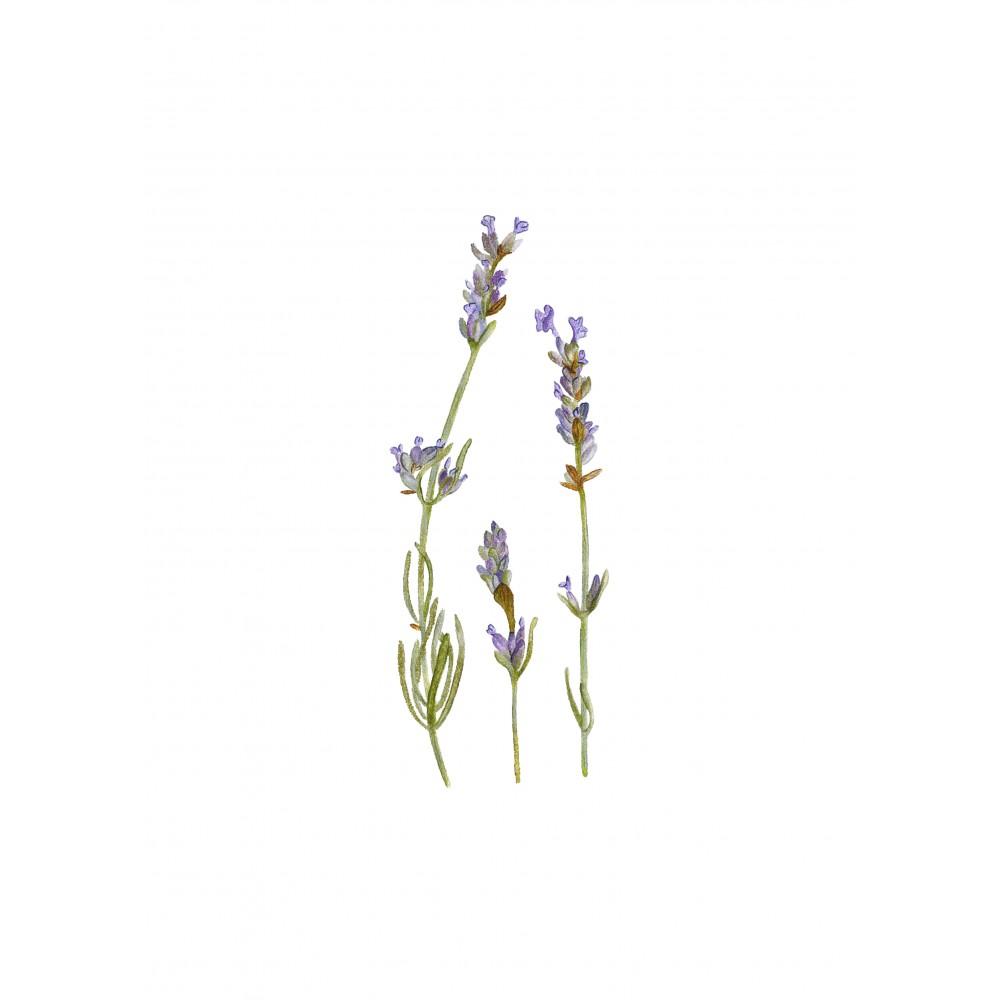 Lavanta Üçlü Çiçek | Fine Art Print